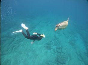 プランの魅力 Let's swim with sea turtles の画像