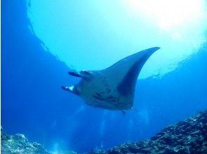 プランの魅力 大迫力のマンタ!優雅に泳ぐ姿はとても美しいです! の画像