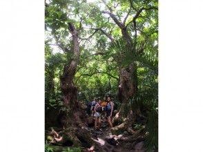プランの魅力 ジャングルの大木 の画像