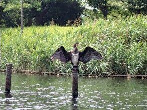 プランの魅力 Cormorant の画像