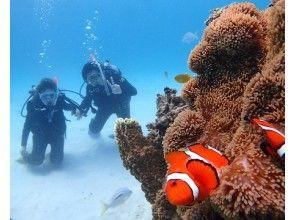 プランの魅力 キレイなサンゴ、魚も楽しめます! の画像