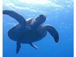 プランの魅力 息継ぎにウミガメが水面にきます! の画像