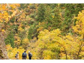 プランの魅力 The brightly colored autumn leaves of the mountains are beautiful ☆ の画像