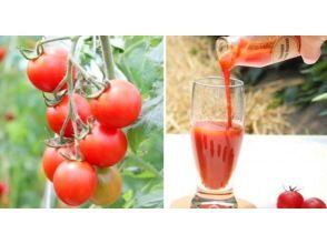 プランの魅力 メディアでも話題なフルーツトマト の画像