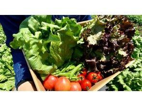 プランの魅力 嬉しい新鮮野菜のお土産! の画像