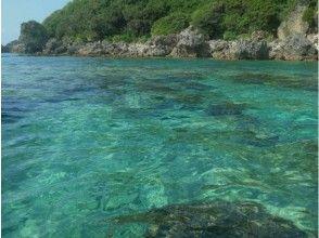 プランの魅力 サンゴや熱帯魚を見る の画像