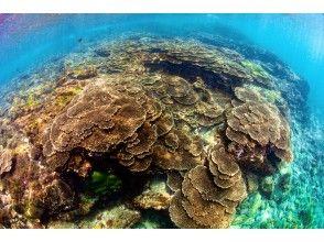 プランの魅力 サンゴ礁の広がる海でダイビング☆ の画像