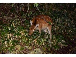 プランの魅力 夜の生き物たちに会いに行こう! の画像