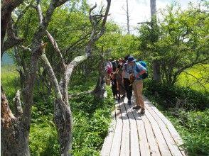 プランの魅力 整備された木道でお手軽ハイキング! の画像