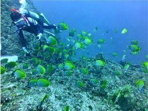 プランの魅力 Enjoy diving to your heart's content! の画像