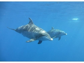 プランの魅力 A large gathering of dolphin lovers! の画像