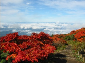 プランの魅力 Zao Natural Botanical Garden の画像