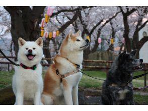 プランの魅力 Experience of interacting with Akita dogs の画像