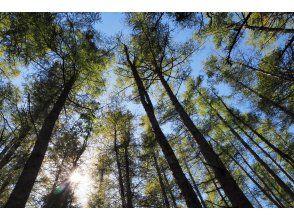 プランの魅力 巨木の森を歩きます の画像