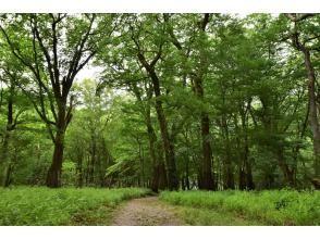 プランの魅力 ほぼ貸し切りの森 の画像