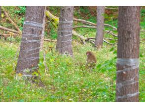 プランの魅力 野生動物との遭遇率はピカイチ! の画像