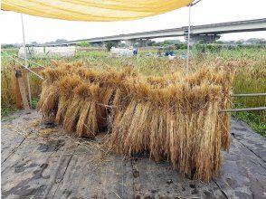 プランの魅力 收获后立即小麦。在称为 Haza 的储存场所干燥。 .. ..从这里开始,我们将其提炼成粉末(''◇'')ゞ の画像