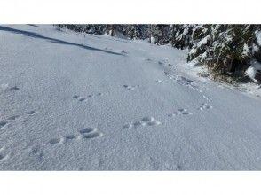 プランの魅力 You can also follow in the footsteps of animals! の画像