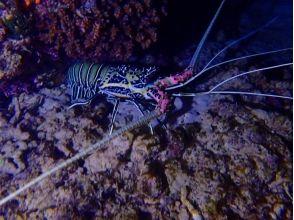 【沖縄・本部町】夜のサンゴや熱帯魚に会いに行こう!シュノーケリングナイトコースの魅力の説明画像