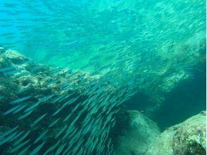 【沖縄・本部町】初心者大歓迎!ライセンス不要の体験ダイビング 【ビーチ・ボート・VIP】の魅力の説明画像
