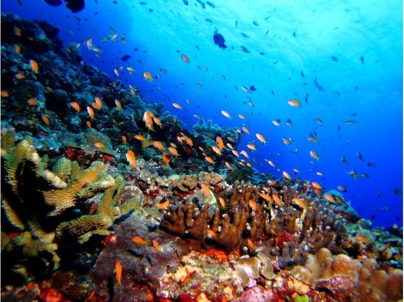 プランの魅力 魚のむれ の画像