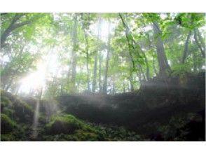 プランの魅力 神秘の森・青木ヶ原樹海 の画像