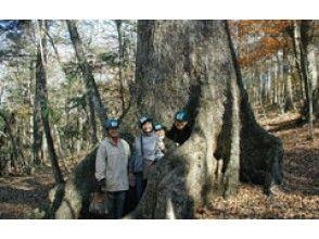 プランの魅力 樹齢400年のミズナラの巨木 の画像