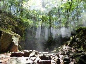 プランの魅力 夏の青木ケ原樹海 の画像