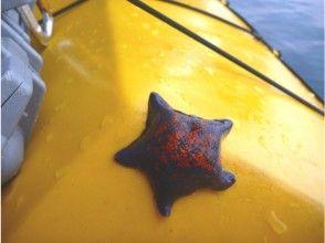 プランの魅力 海には行きものがいっぱい の画像