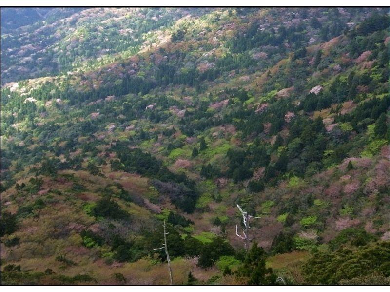 プランの魅力 山の桜衣 の画像