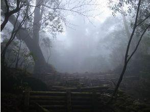 【鹿児島・屋久島】ヤクスギランドと天文の森【しっかり8時間】の魅力の説明画像