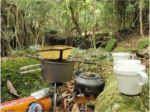 【鹿児島・屋久島】大自然の芸術ガジュマルの森と西部林道に向かいます【約7時間】の魅力の説明画像