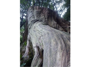 【鹿児島・屋久島】苔むす森でのリラックスタイム【約7時間】の魅力の説明画像