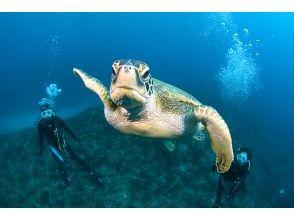 プランの魅力 Yakushima is an island of sea turtles! の画像