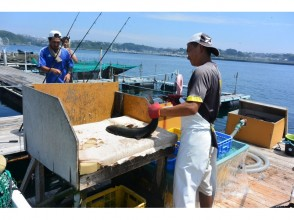 【Kanagawa · Miura】 Beginners and veterans are welcome! All-you-can-fish in a large Ikada at sea! ! Explanation image of charm