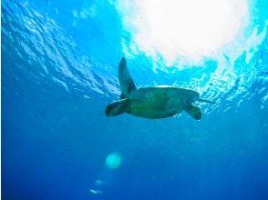 プランの魅力 沖縄の海をとことん満喫 の画像