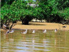 プランの魅力 Various wild birds visit depending on the season の画像