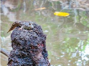 プランの魅力 Creatures living in the mangrove area の画像