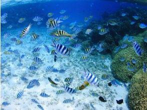 プランの魅力 善良和康复潜水 の画像