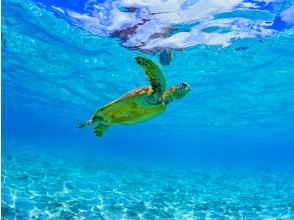 プランの魅力 如果幸运的话,甚至可能遇到海龟 の画像