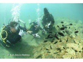 プランの魅力 Attractive experience diving の画像