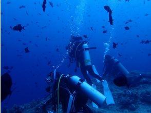 プランの魅力 海の中は非日常 の画像