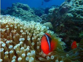 プランの魅力 カラフルな魚も の画像