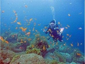 【静岡・伊豆/沼津】魚の群れの中で泳げます/体験ダイビングの魅力の説明画像