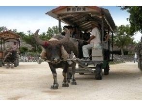 【沖縄・石垣 パナリ島】3島めぐりのクルージング&シュノーケルに水牛車観光!欲張りコースの魅力の説明画像