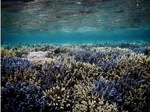 【沖縄・石垣 パナリ島】釣りとシュノーケルの欲張りコースの魅力の説明画像