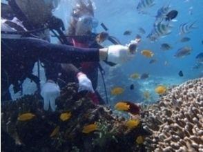【沖縄・石垣】お子様OK!パナリ島で体験ダイビングコースの魅力の説明画像