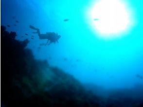 【静岡/伊豆海洋公園】ゆったり潜るファンダイビングコースの魅力の説明画像
