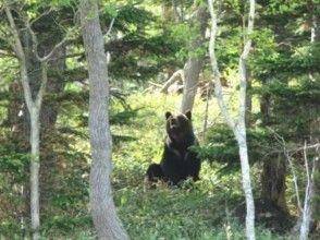 プランの魅力 在棕熊生活的森林中漫步 の画像