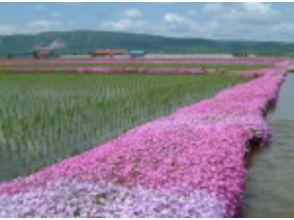 【北海道・名寄】マウンテンバイクで北海道の大自然を散策! ★4400円コース★の魅力の説明画像